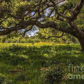 Mitch Shindelbower - Under The Oak Tree