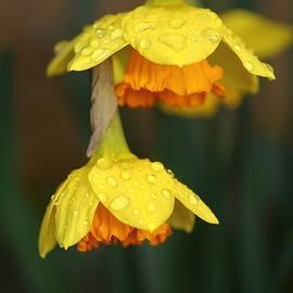 Rumyana Whitcher - Heavy From The Rain