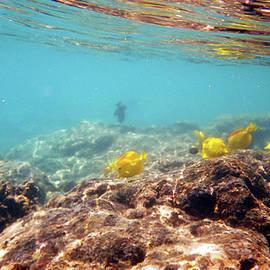 Karen Nicholson - Under the Sea