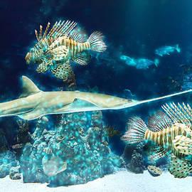 Ericamaxine Price - Underwater Life