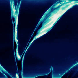Dolly Mohr - Underwater Luminescence