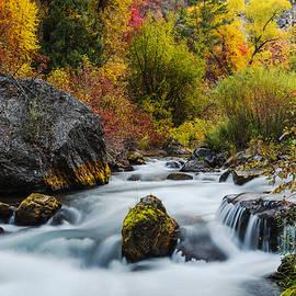 Vishwanath Bhat - Unique Palisades Creek Autumn Glory in Idaho