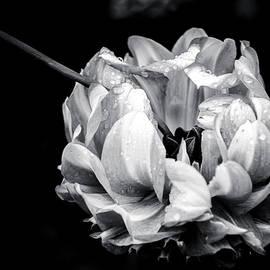 Sophia Pagan - Untitled Plants - 4