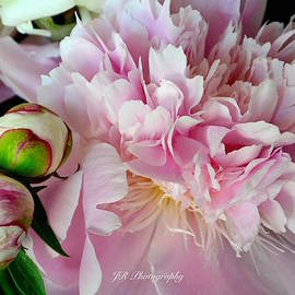 Jeannie Rhode Photography - Be-You-tiful Peony