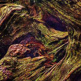 Roger Passman - Uprooted Sequoia