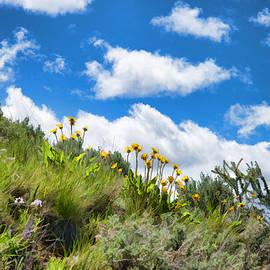 Allan Van Gasbeck - Upslope Wildflowers Painting