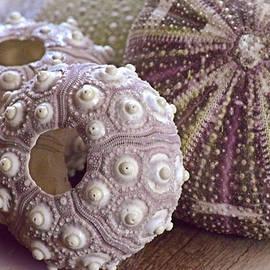 Bonnie Bruno - Urchin Shells