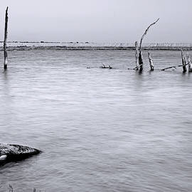 Denise Dube - Vacant Wetlands