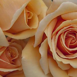 Giulio Marchetto - Valencia Roses chatting