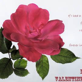 David and Carol Kelly - Valentine Rose