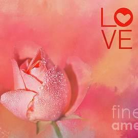 Eva Lechner - Valentine Rose