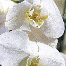 Lali Kacharava - Vanilla