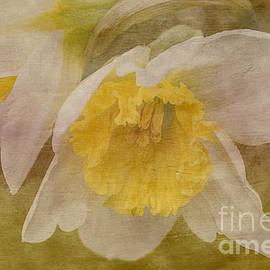 Arlene Carmel - Veiled Narcissus