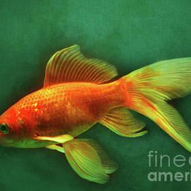 Kathy Franklin - Veiltail Goldfish