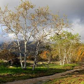 Liz Vernand - Ventura River Preserve Winter 2017