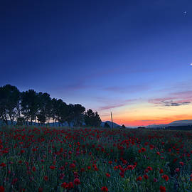 Guido Montanes Castillo - Venus and Moon over spring poppies