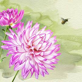 Brenda Carson - Veracruz Dahlia with Bee