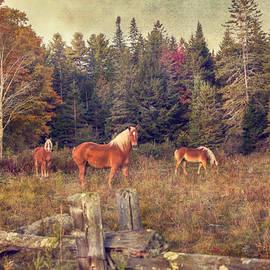 Joann Vitali - Vermont Horse Farm in Autumn