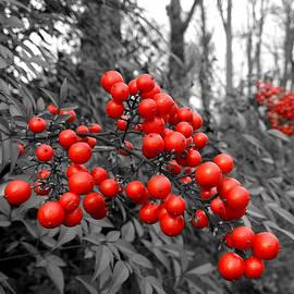 Susan Maxwell Schmidt - Very Very Berry