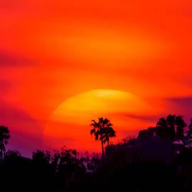 Pamela Newcomb - Vibrant Spring Sunset