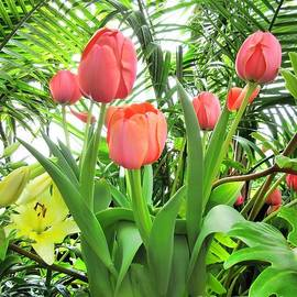 Elizabeth Duggan - Vibrant Tulips