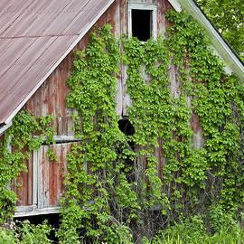 Alan L Graham - Vine Covered Barn