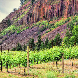 Jean OKeeffe Macro Abundance Art - Vineyard Cliffs