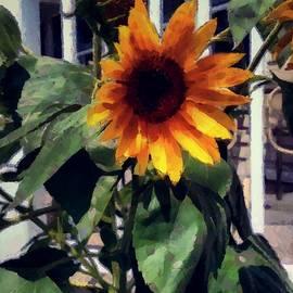 RC deWinter - Vineyard Sunflower