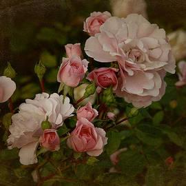 Richard Cummings - Vintage June 2016 Roses