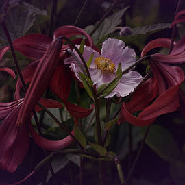 Richard Cummings - Vintage Asiatic Lilies