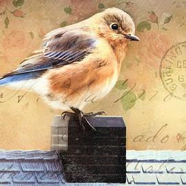 Tina LeCour - Vintage Bluebird