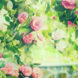 Marianne Campolongo - Vintage Camellias I Postcards