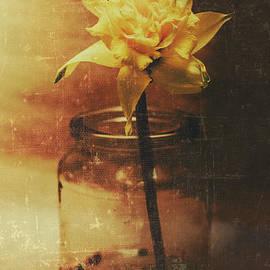 Vintage daffodil flower art - Jorgo Photography - Wall Art Gallery
