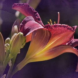 Richard Cummings - Vintage Day Lily No. 2
