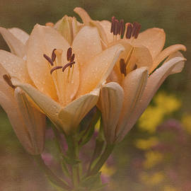 Richard Cummings - Vintage Daylilies