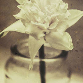 Vintage floral still life of a pure white bloom - Jorgo Photography - Wall Art Gallery