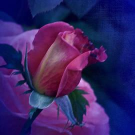 Richard Cummings - Vintage Friday Rose