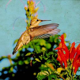 Lynn Bauer - Vintage Hummingbird