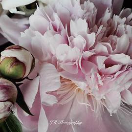 Jeannie Rhode Photography - Romantic Pink Peony