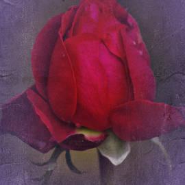 Richard Cummings - Vintage November 2016 Rose