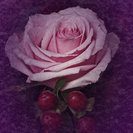 Richard Cummings - Vintage Pink Rose Feb 2017