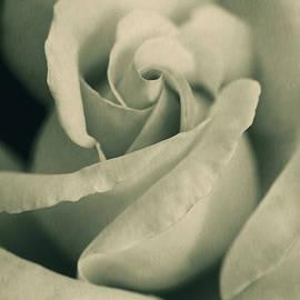 Jennie Marie Schell - Vintage Rose in Green