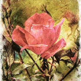 Tina  LeCour - Vintage Rose