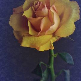 Richard Cummings - Vintage Single Rose