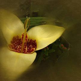 Richard Cummings - Vintage Tiger Flower Aurea 2016