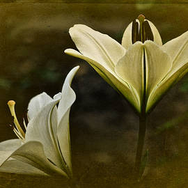 Richard Cummings - Vintage Two Lilies