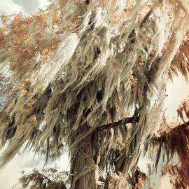 Elizabeth McTaggart - Vintage Veils of Spanish Moss