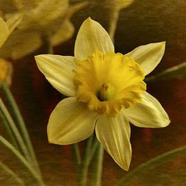 Richard Cummings - Vintage Yellow Narcissus
