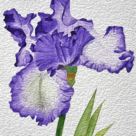 Linda Brody - Violet Iris Flower with Oil Paint Effect