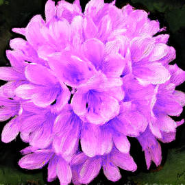Bruce Nutting - Violet Viburnum
